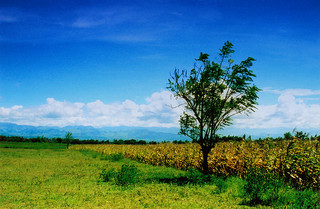 barangay 01.jpg